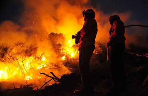 Alto Minho TrEx reúne especialistas em ordenamento florestal e combate aos fogos