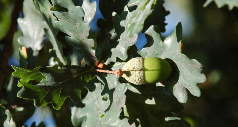 Crianças de Mozelos plantam 300 carvalhos no Dia Mundial da Árvore