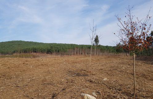 Paredes de Coura investe na floresta