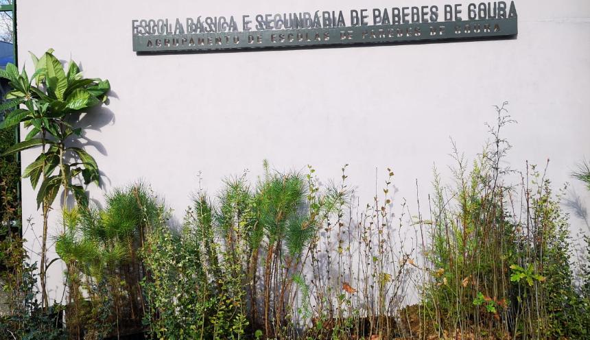 Paredes de Coura distribui árvores autóctones pela comunidade educativa